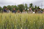 Participatory approaches for IPM. Example of weed control in wheat (copyright: Camilla Moonen)