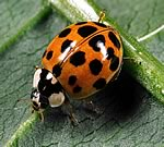 """The Ladybird has Landed!"""